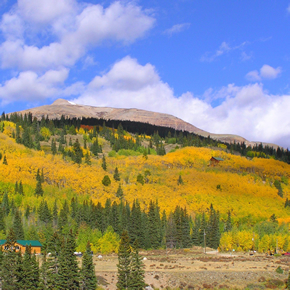 Placer Valley Aspens